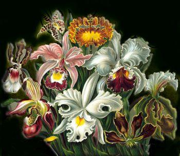Valrees Flowers